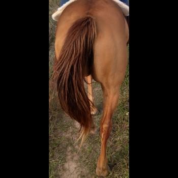 Horseguy36346